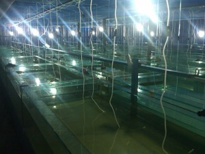 Indoor Hatchery