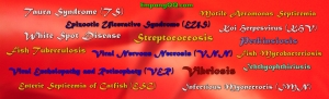 Daftar Penyakit Harus Dikarantina