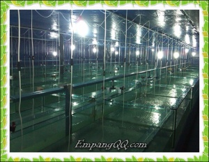 FB Upload -indoor hatchery