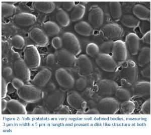 Yolk Platelets