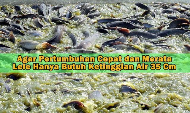 Lele Hanya Butuh Ketinggian Air Kolam 35 Cm Catfish Fabrication