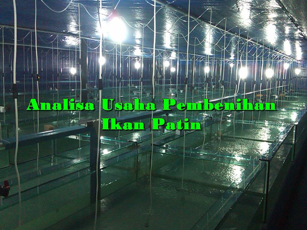Analisa Usaha Pembibitan Ikan Patin