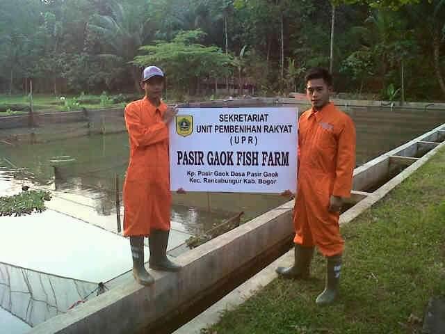Pengertian Sertifikasi dan Cara Pembenihan Ikan yang Baik(CPIB)