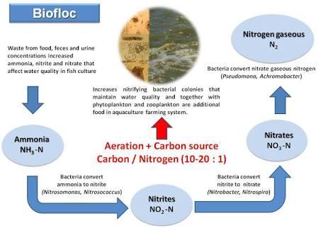 Proses biologis dalam budidaya bioflok