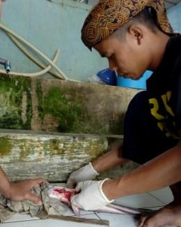 Menjahit Induk Jantan Ikan Lele Pasca Pemijahan – Alat danBahan.